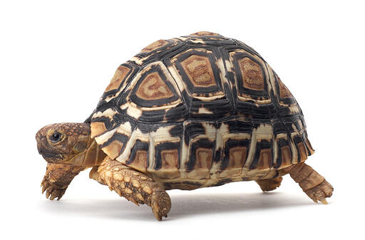 Blog Tortoise